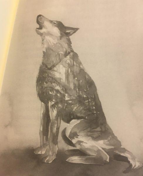 literatura-juvenil-con-animales