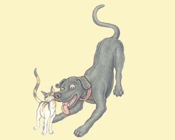 libro-juvenil-animales-el-café-de-los-gatos
