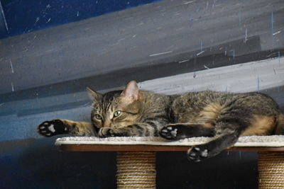 el-cafe-de-los-gatos