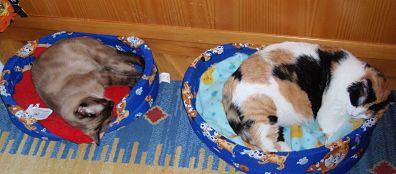 literatura-juvenil-gatos